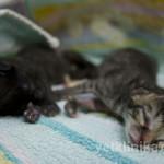 Котята терпеливо ждут свою маму